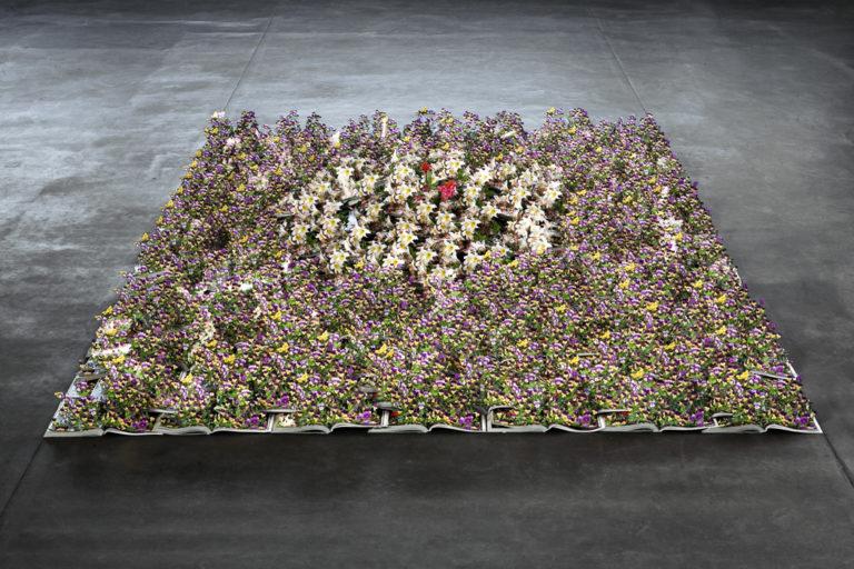 Fiore fiori da giardino · foto gratis su pixabay