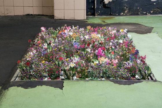 Il giardino dei sogni le migliori piante da siepe per il tuo giardino